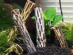 """4 Pieces of Cholla Wood 5""""+ - Aquariu..."""