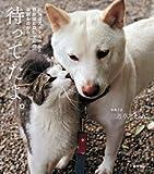北海道犬ナナちゃんと野良猫ヒロちゃんの早朝ものがたり 待ってたよ。