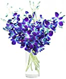 Blue Orchid Bouquet (10 Stems) - With Vase