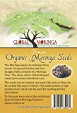 Lawn & Patio - 100 Moringa Oleifera seeds