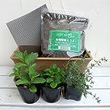 窓辺でハーブと花の栽培セット:ワイルドストロベリー、スペアミントとタイム[ミニプランター][手軽にハーブを]