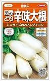 【種子】ダイコン 雪美人大根 3ml
