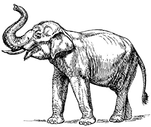 Indian Elephant Line Drawing Card Line Drawing Indian