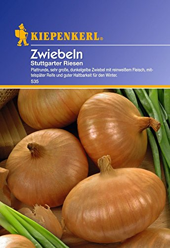 saatgut-zwiebeln-stuttgarter-riesen