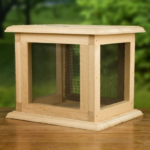 Make Butterfly Feeder front-1036112