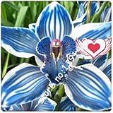 21 Colors 100 Pcs Cymbidium Seeds,Rare Seasons Bonsai Orchid Seeds, Potted Plants, Blue Flowers For Home & Garden,