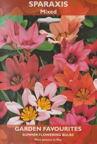 Sparaxis - Mixed - Summer Flowering Bulbs