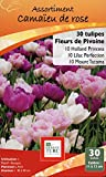 Ernest TURC Pack de 30 Bulbes Tulipe Camaieu de Rose/Violine 13,5 x 7 x 23 cm 130936