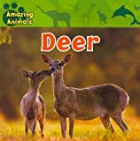 Deer (Amazing Animals)