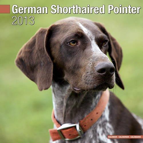 German ShortHair Pointer 2013 Wall Calendar