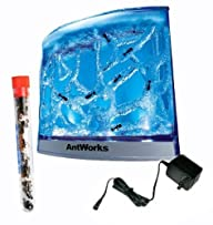 Live Lighted Blue Gel Ant Habitat Shi…