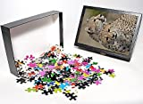 Photo Jigsaw Puzzle of Cheetah (Acinonyx...