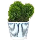 盆栽 インテリアグリーン 人工観葉植物 マリモ (点十草) 高さ約13cm