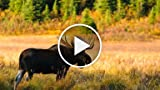 What Should You Wear for Moose & Deer Hunting?