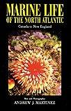 Marine Life of the North Atlantic: Canada to New England