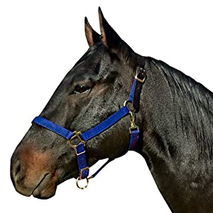 Intrepid International Breakaway Leather Crown Nylon Safety Halter, Cob Navy