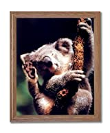 Koala Bear Climbing Tree Animal Wildlife Wall Picture Oak Framed Art Print