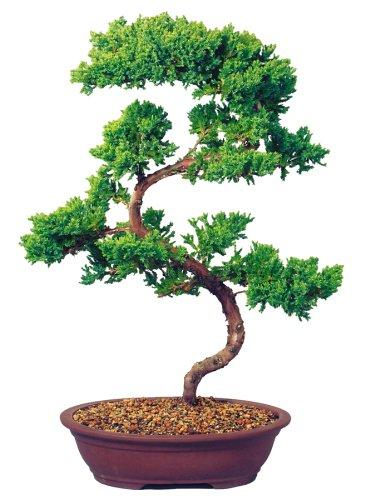 brussels bonsai promo code