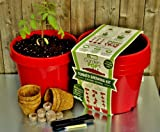 GardenPop Tomato Growing Kit - Grow Tomatoes From Seed to Harvest
