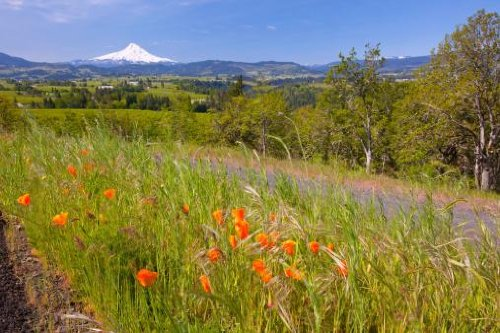 Wildflowers Growing In A Field With A View Of Mount Hood Wall Decal - 72 Inches W X 48 Inches H - Peel And Stick Removable Graphic front-623792