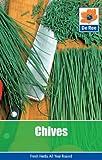 Chives (Garden Treasures)