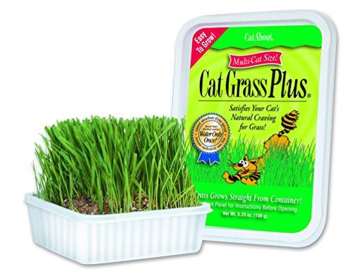 cat-about-multi-cat-catgrass-plus-tub-150-grams-by-miraclecorp-gimborn