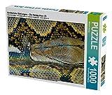 Gefährliche Schlangen -  Der Netzpython (2) 1000 Teile Puzzle quer: Schlangen - geheimnisvolle Wesen aus Urzeiten. Symbol für Macht, Tod und Unheil, ... und ewigem Leben. (CALVENDO Tiere)