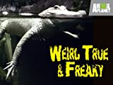 Weird True and Freaky: Creature Creations