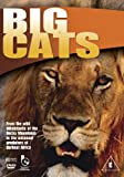 Wildlife Big Cats Import anglais