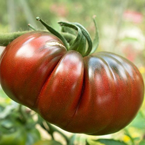 pack-vegetable-seeds-tomato-black-russian-kings-quality-seed