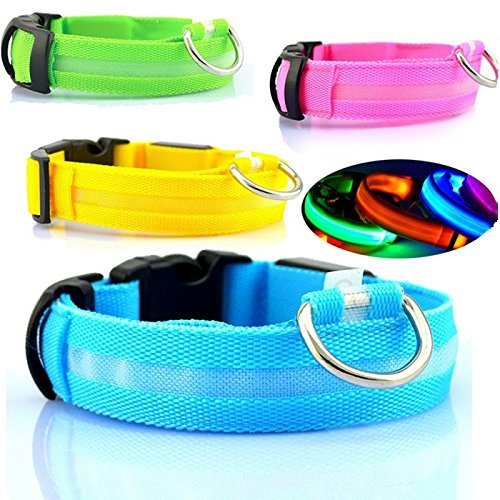 Best Dog Collars With Lights Webnuggetz Com