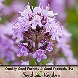 20,000 Seeds, Creeping Thyme (Thymus serpyllum) Seeds By Seed Needs
