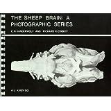 The Sheep Brain: A Photographic Series