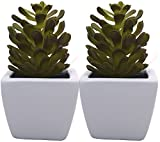 Fourwalls 16.5cm Tall Artificial Succulent Plant in a Stylish Ceramic Vase (Set of 2)