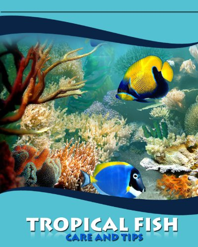 Tropical fish tank care aquarium maintenance schedule 2017 for Fish tank care