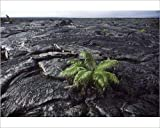 Photographic Print of FG-BA-173 USA - Hawaii - Big Island - Hawaii Volcanoes National Park