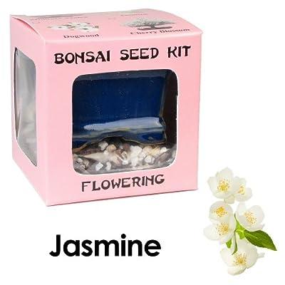 Eve's Jasmine Bonsai Seed Kit, Flowering, Complete Kit to Grow Jasmine Bonsai from Seed from Eve's Garden, Inc
