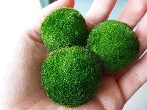 3-LUFFY-Giant-Marimo-Moss-Balls
