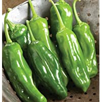 Pepper Mellow Star D2592A (Red Sweet) 25 Seeds by David's Garden Seeds