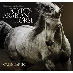 Egypts Arabian Horse: Wall Calendar 2011