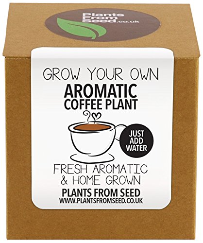 plants-from-seed-grow-your-own-coffee-plant-kit