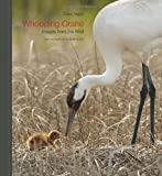 Whooping Crane: Images from the Wild