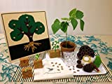 Shoots And Sprouts Montessori By Mom Kids Toolbox