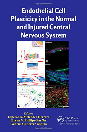 Endothelial Cell Plasticity in the Normal and Injured Central Nervous System