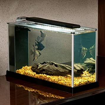 Betta dance best buy fluval spec v aquarium kit for Cheap 5 gallon fish tank