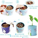 Edtoy 20pcs Wholesae Magic Bean Seeds Plant Growing Message Word for Gifts
