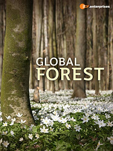 Global Forest on Amazon Prime Video UK