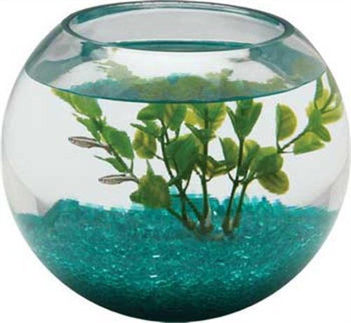 Spiffy pet products betta fish glass bowl for 2 gallon fish bowl