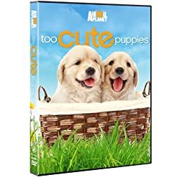 Too Cute Puppies