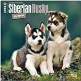 BrownTrout Siberian Husky Puppies 2014 Wall